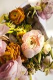 Torra pionblommor och pionkronblad Royaltyfria Bilder