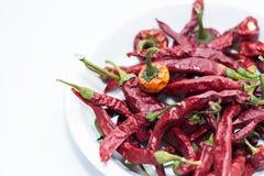 Torra röda chilipeppar Fotografering för Bildbyråer