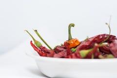 Torra röda chilipeppar Royaltyfri Fotografi