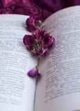 Torra rosor och en bok Royaltyfri Fotografi