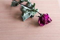 Torra rosor som förläggas på ett trä arkivfoto