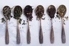 Torra sidor av olika sorter av te i antika skedar på en vit bakgrund Royaltyfria Foton