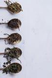 Torra sidor av olika sorter av te i antika skedar på en vit bakgrund Royaltyfri Fotografi