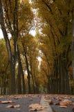 Torra sidor för brunt på en parkeragränd Royaltyfri Foto