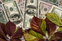 Torra sidor för höst på kassa, dollar som valuta Arkivbild