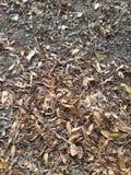 Torra sidor på jordning i höstträdgård Royaltyfri Fotografi