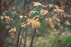 Torra sidor på trädet i höst royaltyfri foto