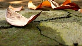 Torra sidor som faller på den stenlade vägen