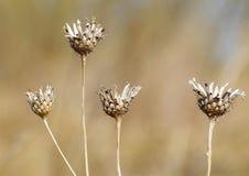 Torra stammar av växter Fotografering för Bildbyråer