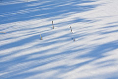 Torra stammar i snön Arkivbilder