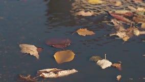 Torra stupade sidor ligger på att skvalpa slag för vatten och för ljus vind arkivfilmer