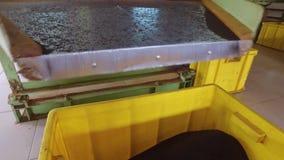 Torra teblad som faller från maskinen till korgar arkivfilmer