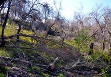 Torra träd i busken Royaltyfria Foton