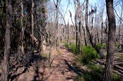 Torra träd i busken Arkivfoto