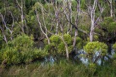 Torra träd i vatten bland gröna buskar Arkivbilder