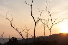 Torra träd med kullar bakom Arkivbilder