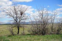 Torra träd och berg Royaltyfria Bilder
