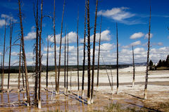 Torra träd och en molnig himmel på den Yellowstone nationalparken, USA Royaltyfria Bilder
