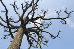 Torra träd och himmel Arkivbild