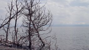 Torra träd på banken av den tysta sjön stock video