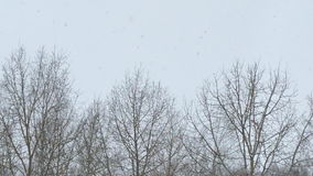 Torra träd på en bakgrund av grå himmel under ett snöfall lager videofilmer