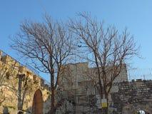 Torra träd på ingången av al-Aqsamoskén, Jerusalem royaltyfri fotografi