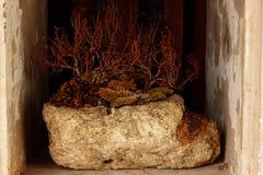 Torra träd som dekoreras på stenar fotografering för bildbyråer