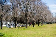 Torra trees Arkivfoton