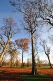 Torra trees i höst Arkivbilder