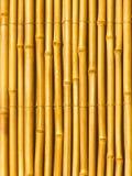 torra treestammar för bambu Royaltyfri Bild