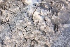Torra tunna filialer ligger på den smältande insnöade mars för våren Överkantlägenhetsikt Sammansättningen av abstrakta naturliga arkivfoto