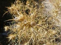 Torra växter Arkivbild