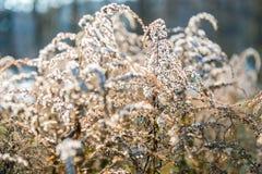 Torra växter Arkivfoton