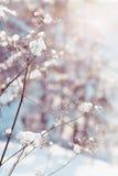 Torra växter i snow Royaltyfri Foto