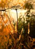 Torra växter på bakgrunden av höstlandskapet Royaltyfri Foto
