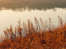 Torra växter på bakgrunden av höstlandskapet Arkivbilder