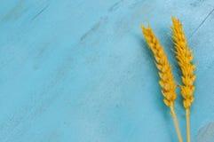 Torra veteöron på blå bakgrund Arkivfoto