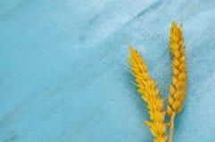 Torra veteöron på blå bakgrund Arkivfoton