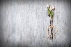 Torra vita rosor som binds på dess stam i förgrunden på tabellen Royaltyfria Bilder