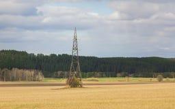 Torre ad alta tensione in un campo vicino ad un'abetaia Immagini Stock Libere da Diritti