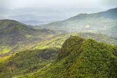 Torre Britton jungle view Stock Photography