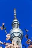 Torre con los flores de cereza, Japón del árbol del cielo de Tokio Imagen de archivo libre de regalías