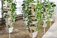 Torre da planta de morango Foto de Stock