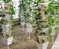 Torre da planta de morango Fotografia de Stock