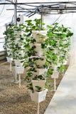Torre da planta de morango Foto de Stock Royalty Free