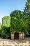 Torre de água coberta com as uvas selvagens na nova de Askania Imagens de Stock