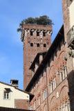 Torre de Torre Guinigi em Lucca, Itália Fotos de Stock