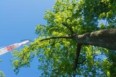 Torre de la TV en los árboles Sunny Summer Wireless Communica del verde del cielo azul Imagen de archivo