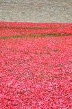 Torre de Londres com o mar das papoilas vermelhas para recordar os soldados caídos de WWI - 30 de agosto de 2014 - Londres, Reino Imagem de Stock Royalty Free