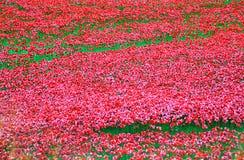 Torre de Londres con el mar de las amapolas rojas para recordar a los soldados caidos de WWI - 30 de agosto de 2014 - Londres, Re Foto de archivo libre de regalías